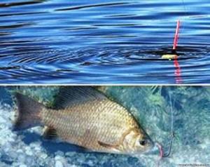 Что чувствует рыба