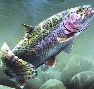 Поведение рыб в зависимости от температуры воды