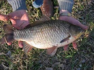 Секреты рыбаков «карасятников»